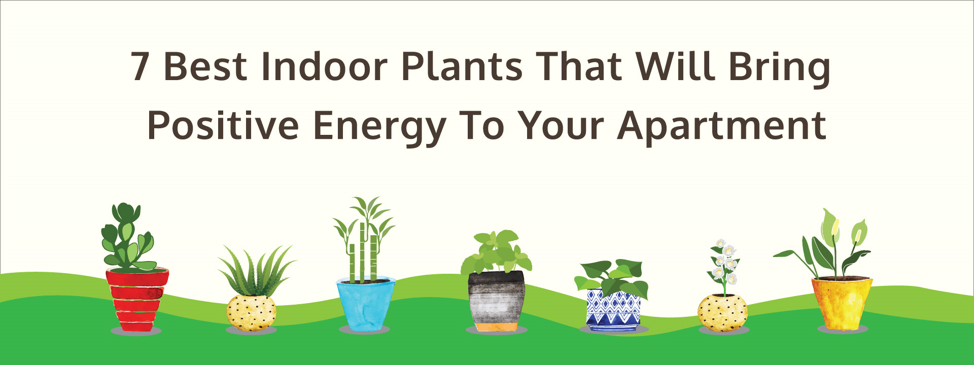 7 Best Indoor Plants That Will Bring Positive Energy To Your Apartment